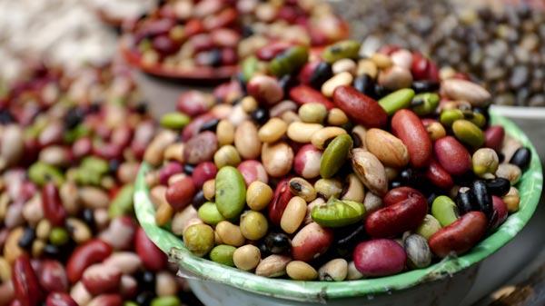 haricots riches en protéines